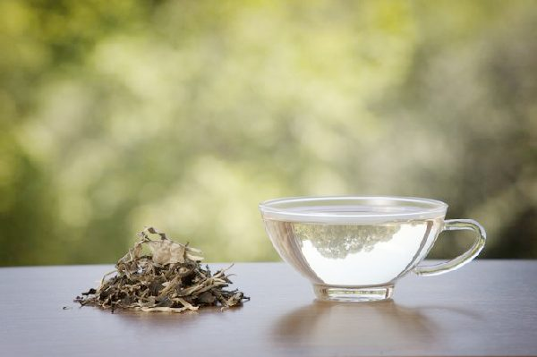 White Tea to Lose Weight